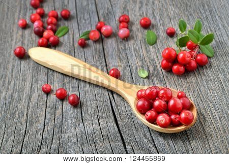 Cowberry in the wooden spoon on rustic table