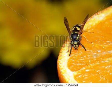 Avispa naranja