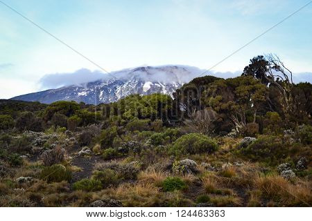 Highest mountain in Africa Kilimanjaro  top view