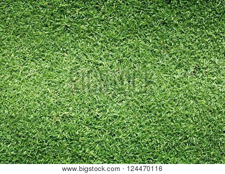 Golf Courses green lawn background natural green grass.