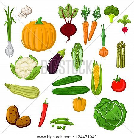 Tomato and pepper, eggplant and cabbage, corn and potato, onion and pumpkin, beet and carrot, broccoli and cauliflower, garlic and radish, asparagus and green pea, cucumber, chinese cabbage and zucchini vegetables for agriculture or cooking design