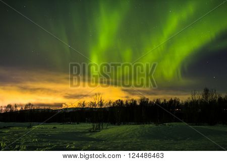 Northern lights in the night sky over the forest