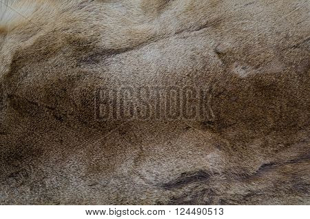 Natural brown fur texture background. Deer abstract background Fur