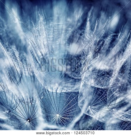 Beautiful blue abstract background, close up photo of dandelion flower, dreamy floral wallpaper, beauty of spring season