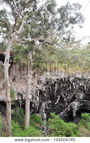 Tall Karri trees at the sunken forest with limestone cliffs outside the entrance to the Lake Cave in Margaret River, Western Australia.