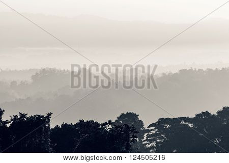 Tropical landscape overgrown with palm trees. Low clouds covers the hills in the background