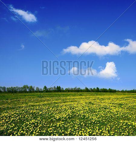 dandelion green field