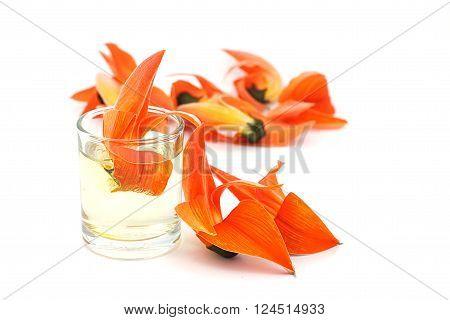 Petals of Bastard Teak Flower on white background. Bastard teak flower in a glass of water.