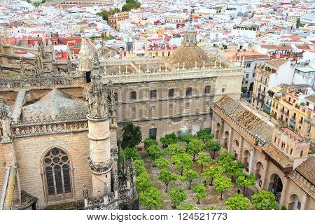 Cathedral Courtyard In Seville