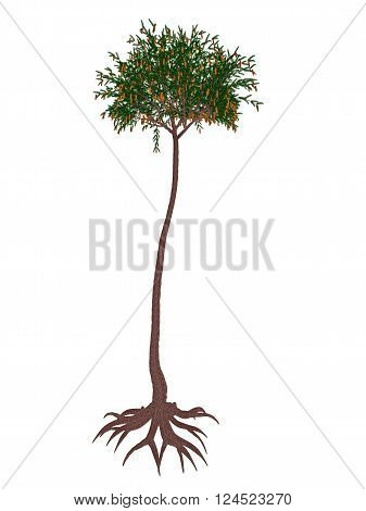 Lepidodendron aculeatum prehistoric tree isolated in white background - 3D render