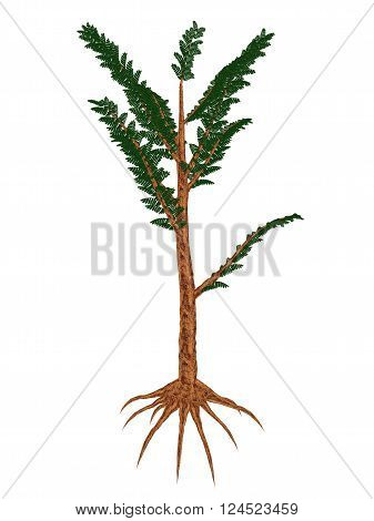 Pachypteris prehistoric plant isolated in white background - 3D render