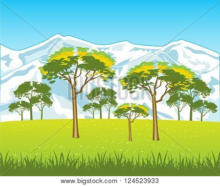 The High snow mountains and field with flower.Vector illustration