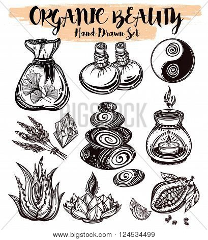 Hand drawn organic medicine. Organic herbs, cosmetics and healing set. Isolated illustration in vector. Organic plants, alternative medicine background. Natural holistic ingredients. Template.