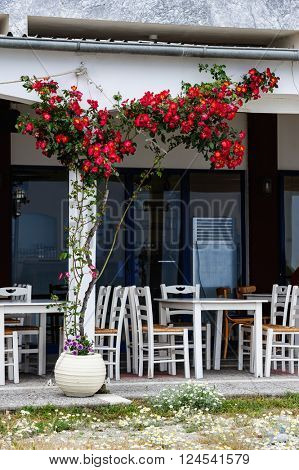 Outdoor cafe with rosebush