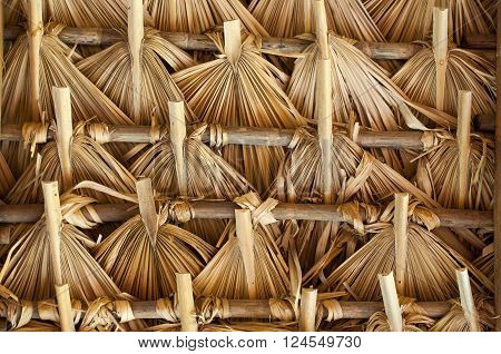 Primitive thatch of palm leaves in hot countries of South America