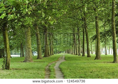 Path in a park of Caen (Calvados Normandy France) in a summer evening