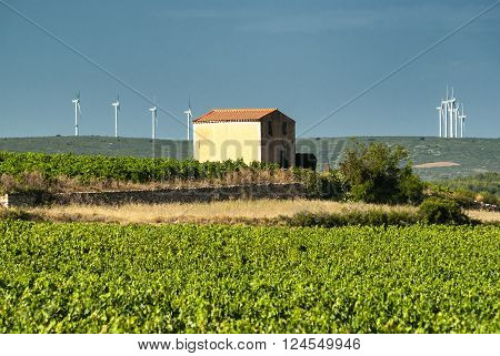 Vineyard in Languedoc-Roussillon France) near Montpellier at summer and wind turbines