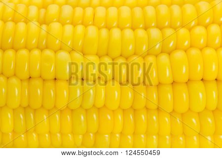 Concept of Close-up of yellow sweet corn.