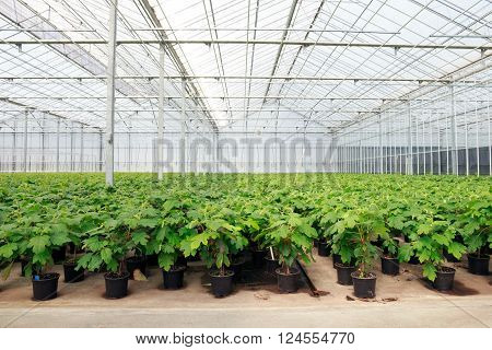 Inside view of a greenhouse with cultivation