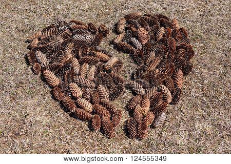 Conceptual image of pine cones in heart shape. Heart Symbol.