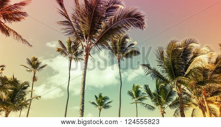 Coconut Palm Trees Over Cloud Sky Background