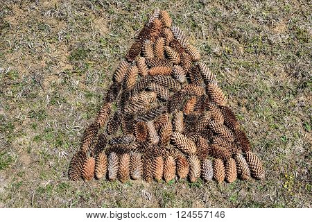 Conceptual image of pine cones in tree shape.