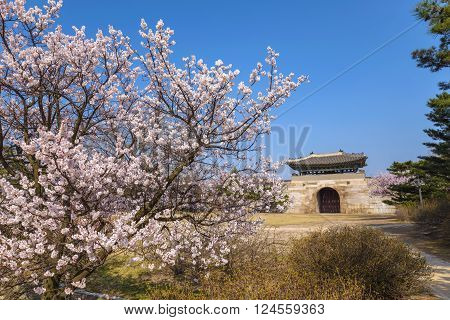 Gyeongbokgung Palace with cherry blossom Seoul South Korea