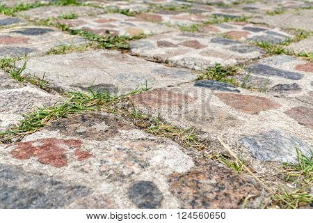 Old overgrown cobbled pavement.Closeup.Small depth of field.