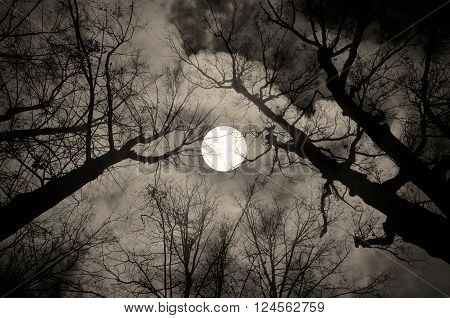 Gothic night landscape in sepia tones - silhouettes of the bare tree branches on the background of the full moon and dramatic cloudy night sky