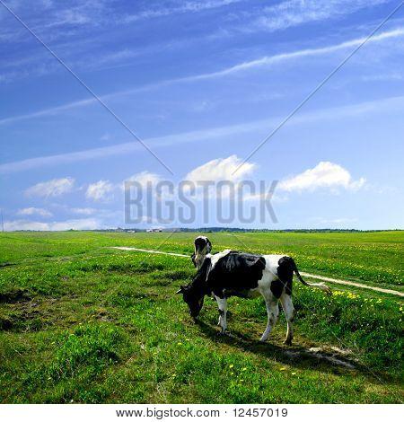 Kuh auf der grünen Wiese