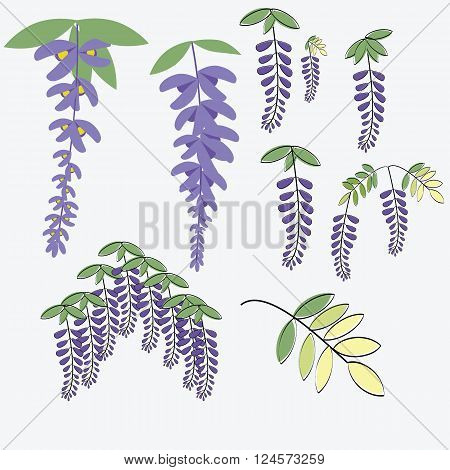 Wisteria set include Japanese comics paint style and flat vector with leaves isolated on white background illustrations vector for use in spring