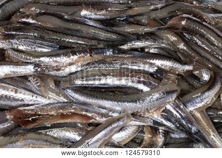 Anchovies in market in Naples, macro picture