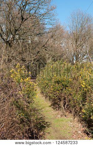 Grassy Pathway