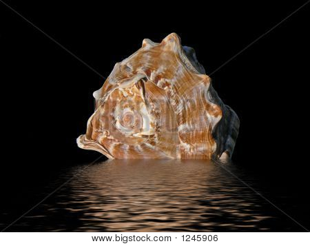 Seashell4