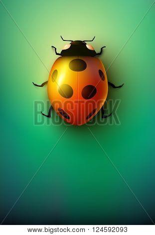 vector ladybug illustration