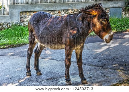 a brown donkey on a country road