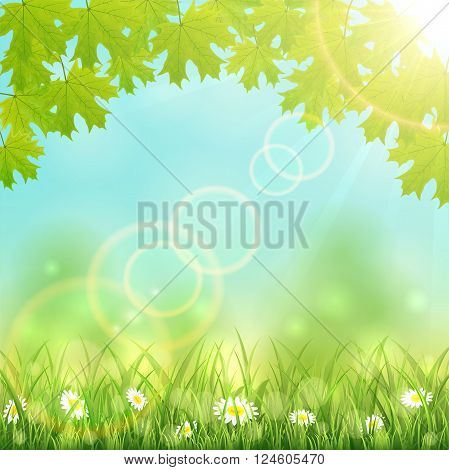 Nature background with flowers in the grass, maple leaves and Sun, illustration.