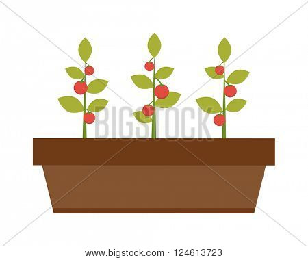 Young green plant seedling growing in a soil flat vector.