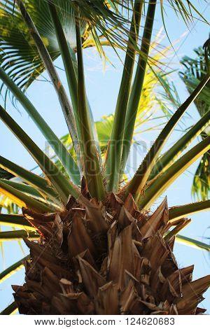 Date palm trunk close up beautiful  photo