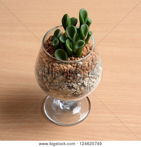Make closer to nature with small cactus in glass on wooden table.