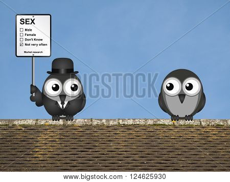Comical market research sex sign with birds perched on a rooftop against a clear blue sky