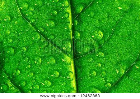 Waterdrops auf grüne Pflanze Blatt