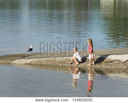 Tauranga, New Zealand - March 13, 2016;Two children playing near water on boat ramp while black back gull stands unconcerned nearby