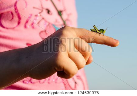 Small grasshopper sitting on a finger in a day of summer.
