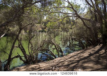 Swan River hidding behind trees view in Maali Bridge Park Swan Valley wine region Western Australia