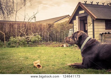 Dog with a bone in a garden with a doghouse