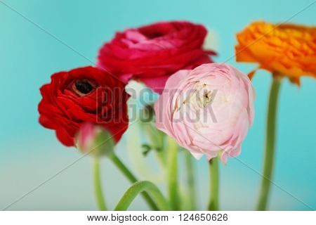 Bouquet of Persian buttercups, close up