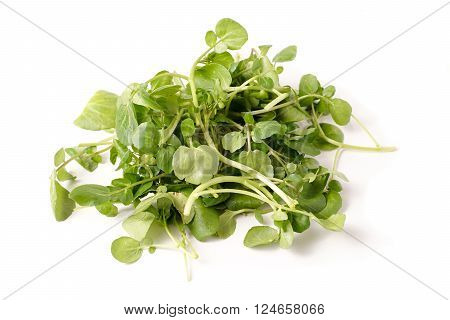 freshly picked organic watercress isolated on white