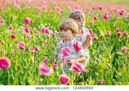 Two funny little sibling boys, kids and friends in blooming poppy field with pink flowers. Active leisure with kids in summer, on sunny warm day, outdoors.