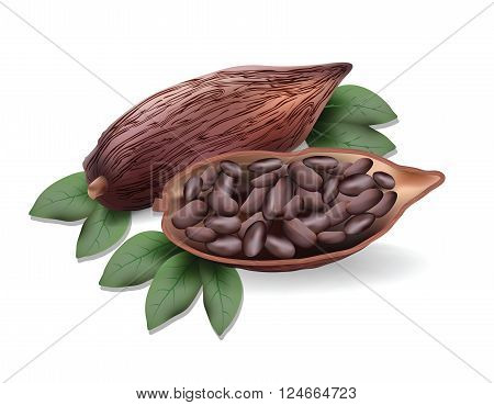 Cocoa beans for your design, ripe cacao beans